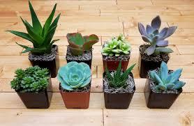 Mini Plants | 2 mini plants variety package of 20 fat plants san diego