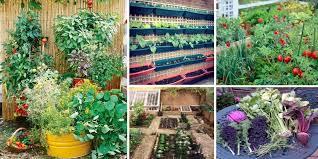 how to plan a vegetable garden