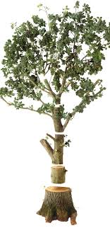 facts about trees for tree information dk find out