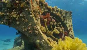 divers will pay to protect coral reef biodiversity new study