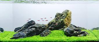 Aquascape Aquascape Analysis Of George Farmer U0027s One Pot Iwagumi Scapefu