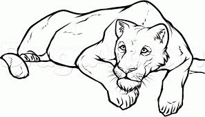 draw lioness step step safari animals animals free