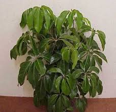 names and images of house plants house decor