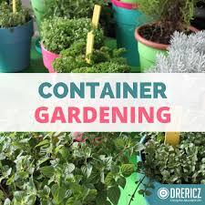 Summer Gardening - early summer garden update container gardening drericz com