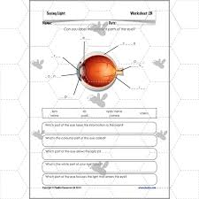 seeing light the eyes planbee single lesson plan