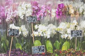 orchids for sale pink colour orchids for sale stock image image of