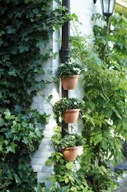 homelife 10 best plants for vertical gardens 10 best elho images on pinterest container garden gardening and