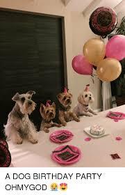Birthday Dog Meme - nmv mn a dog birthday party ohmygod birthday meme on me me