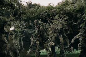 ents the one wiki to rule them all fandom powered by wikia