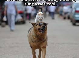 Cool Cat Meme - you might think you re cool cat humor