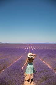 lavender fields in provence france france travel tips