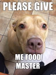 Dog Food Meme - begging dog meme on imgur