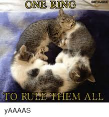 One Ring To Rule Them All Meme - one ring cat plan to rule them all yaaaas meme on sizzle