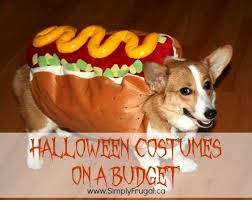 Funny Halloween Animal Costumes 83 Dog Costumes Images Pet Costumes Animal