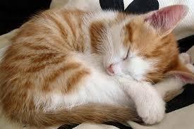 imagenes de gatitos sin frases frases chistosas sobre los gatos