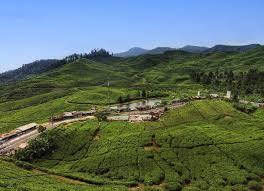Teh Murah kebun teh dekat villa puncak bogor murah places to visit