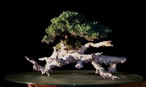 pot bonsai design artofbonsai org u2022 view topic north american entries