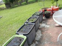 self watering container garden 5 gallon buckets youtube