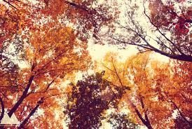 Why Fall Is The Best Season 11 Reasons Why Fall Is The Best Season