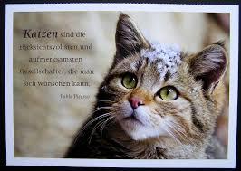 katzen sprüche bnbnews co cats cat animal and - S E Katzen Spr Che