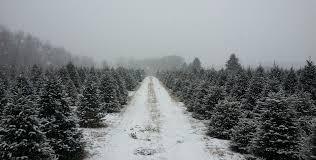 christmas landis tree farmtmas farms near memphis me for sale