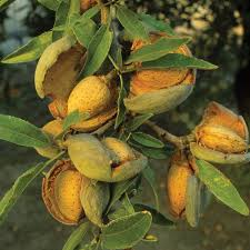 jojoba almond coconut oils gifts favorite carrier oils in