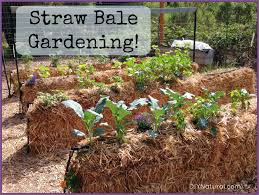 Best Type Of Mulch For Vegetable Garden - straw bale gardening an easy way to grow food