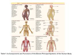 A Picture Of The Human Anatomy Chapter 1 Organization Of The Human Body Ppt Video Online Download