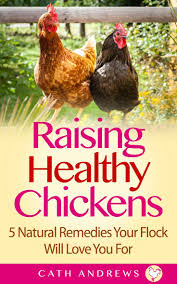 61 best chickens images on pinterest chicken backyard