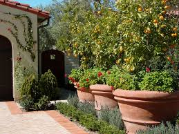 Backyard Plants Ideas Large Container Planting Ideas Houzz