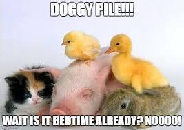 Baby Animal Memes - baby animals memes imgflip