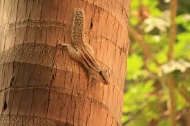 free images tree branch wood leaf trunk wildlife brown