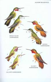 peterson field guide to birds of north america roger tory