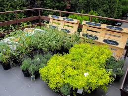 Roof Garden Plants | best terrace roof garden plants you should grow