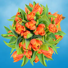 tulips flowers for sale free delivery global