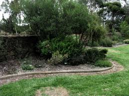 australian native plants for rock gardens video and photos building good looking stone walls