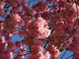 free images tree branch leaf flower petal bloom food