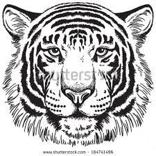 black white vector sketch tigers face stock vector 160226018
