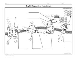 Activity Light Dependent Reactions Coloring Page Photosynthesis Coloring Page