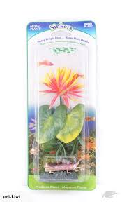 Lily Plant Pp Red Water Lily Plant 21 6cm Trade Me