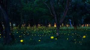 How Do Fireflies Light Up Fireflies 12 Things You Didn U0027t Know About Lightning Bugs Mnn