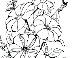dead flower coloring page flower coloring pages free printable picture of page amazing dead