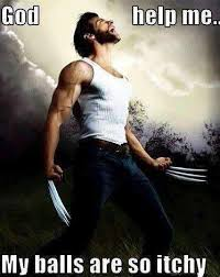 Wolverine Picture Meme - wolverine omg my balls are itchy miscellaneous pinterest