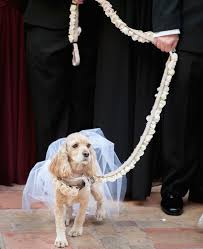 dog in wedding 21 of our favorite pet in wedding events inside
