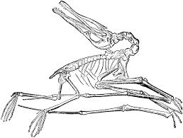 dinosaur fossil clipar clip art library