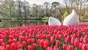 10 ways to take in the tulips in amsterdam i amsterdam