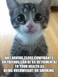 Kitty Meme Generator - irritated cat meme generator imgflip memes i ve made pinterest