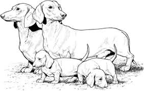 dachshund puppies coloring free printable coloring pages