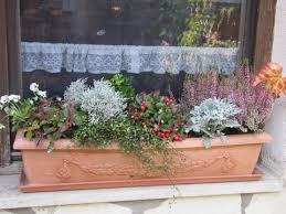 herbstbepflanzung balkon was planzt ihr im herbst mein schöner garten forum