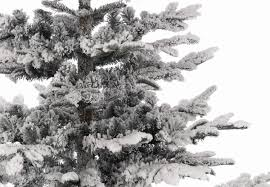 9ft snowy nobilis fir life like artificial christmas tree hayes